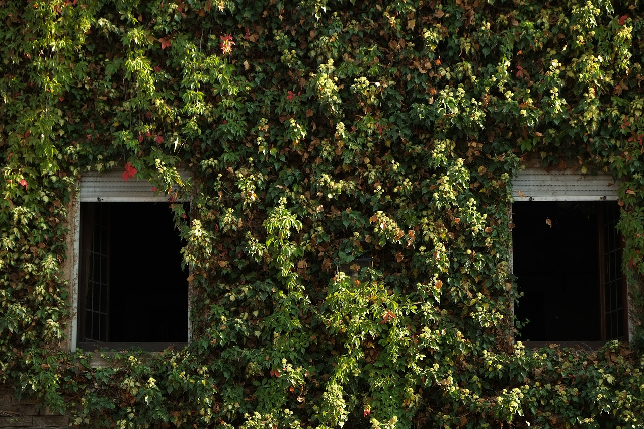 Pnącza na budynku – Rośliny, które zasłonią brzydki mur
